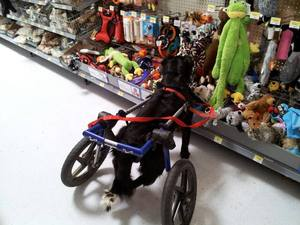 walkin-wheels-in-get-on-the-shelf-contest