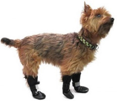 Pet Boots on Sale
