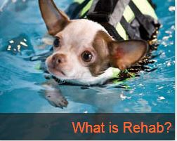 What is Animal Rehab